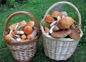 В Тамбове прошли соревнования по сбору грибов