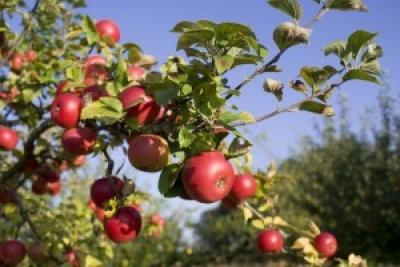 В Тамбовской области в этом году планируют заложить более 800 гектаров садов