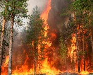 В Тамбовской области на Первомай произошло два лесных пожара