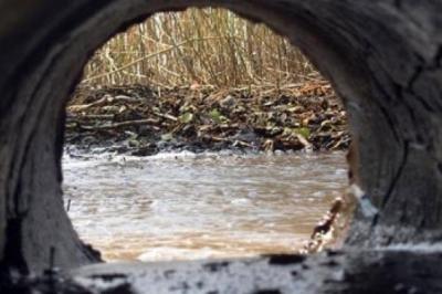 В реку Студенец в Тамбове вылились сточные воды