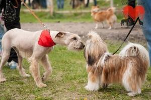 В Тамбове пройдёт выставка беспородных собак
