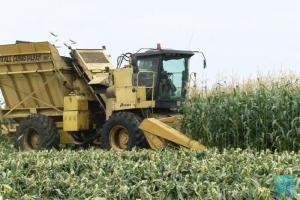 На полях Тамбовской области началась уборка кукурузы
