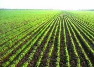 Тамбовская область в этом году увеличит посевные площади