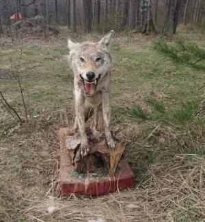 На въезде в Тамбов поставили чучело волка