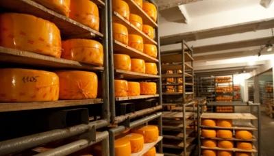 Бизнесмены из списка Forbes будут развивать в Тамбовской области производство сыра